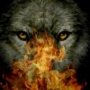 SN.Wolf